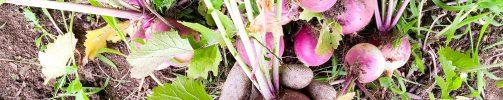 Urban Farming Volunteer Learning Program – Apply Now!